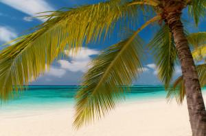mle-reethi-beach-palme