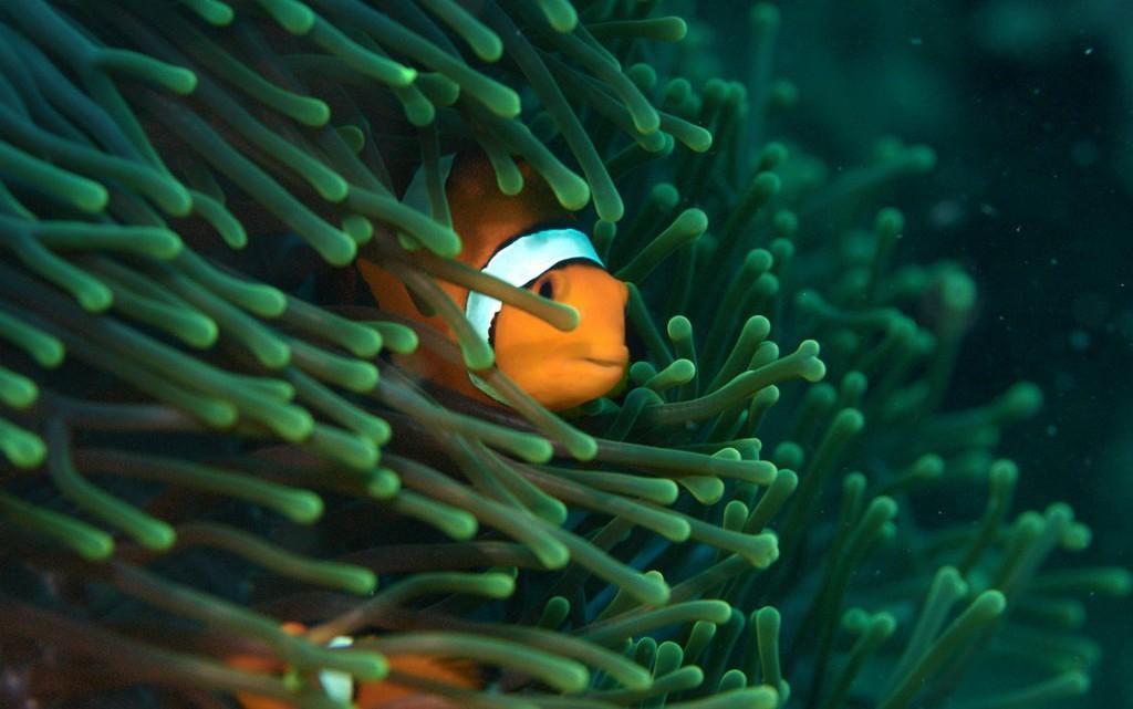 tau-thailand-unterwasser3