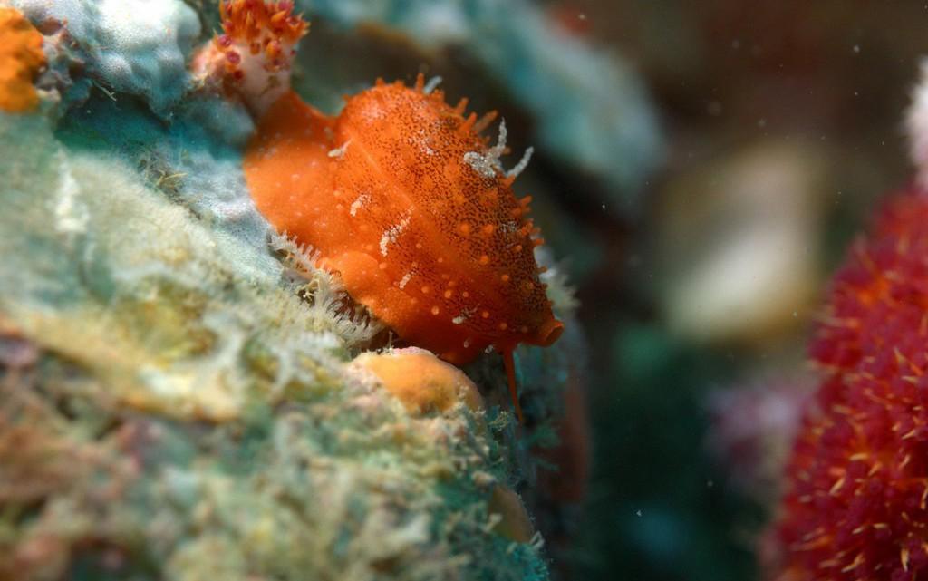 tau-thailand-unterwasser4