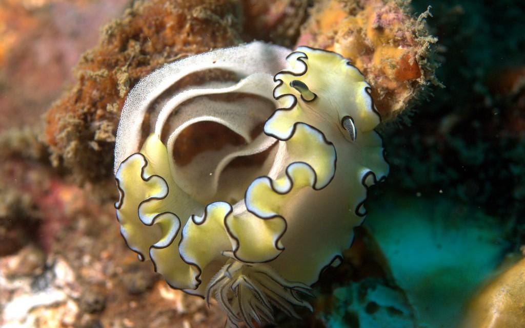 tau-thailand-unterwasser1