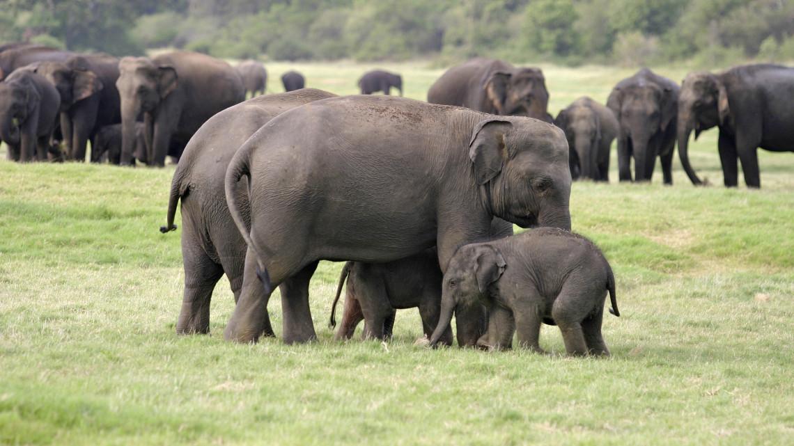 cmb-ayubowan-elefanten1