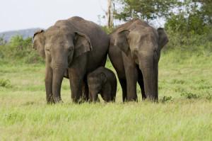 cmb-ayubowan-elefanten2