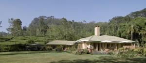 Tea Trails Norwood