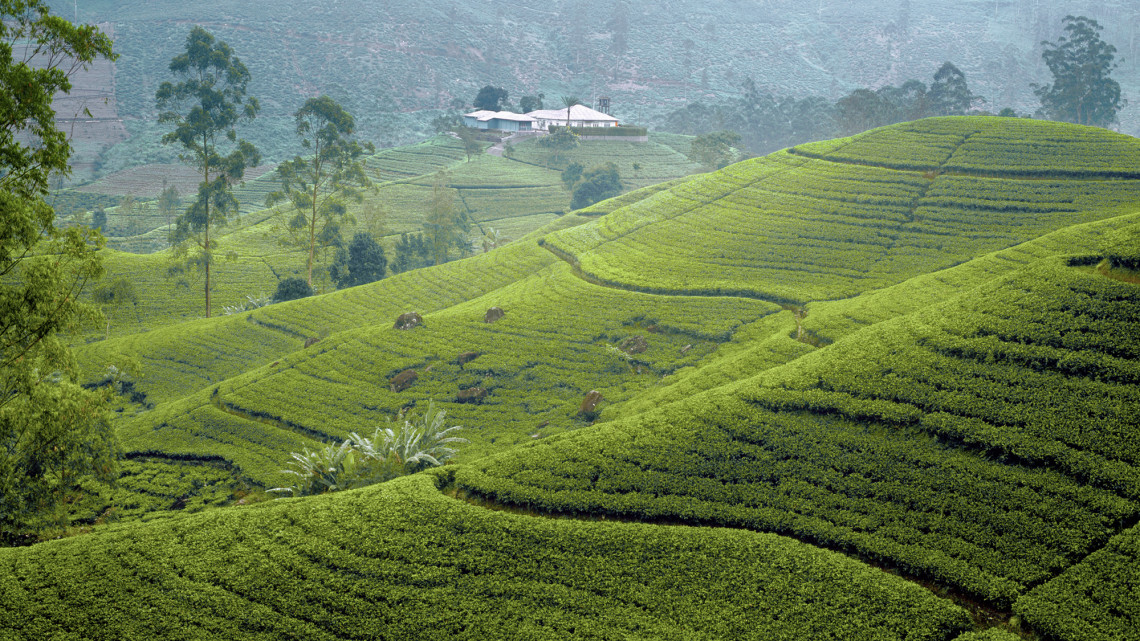 cmb-ayubowan-teeplantage.jpg