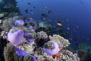 mle-kandolhu-unterwasser2