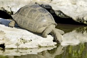 sez-fantastische-inselwelt-schildkröte.jpg