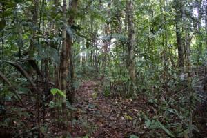 tau-papua-reise-vogel