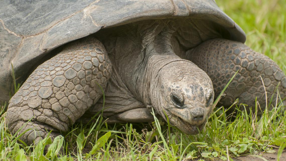 sez-mojito-schildkröte.jpg