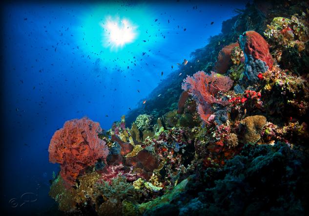 tau-halmahera-unterwasser-1