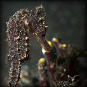 tau-halmahera-unterwasser-5