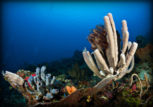 tau-halmahera-unterwasser-7