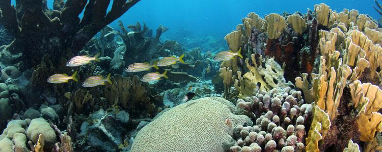tau-curacao-unterwasser1