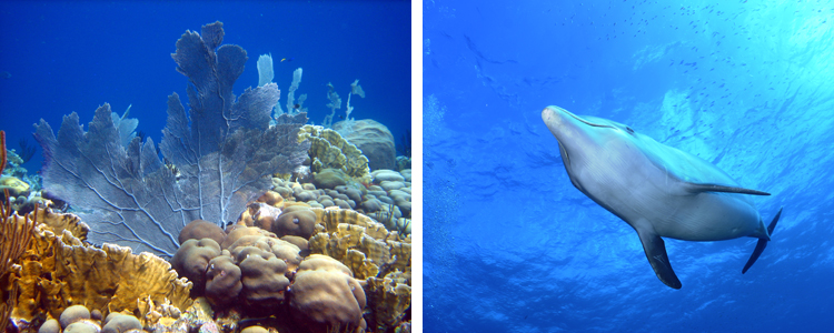 tau-curacao-unterwasser3
