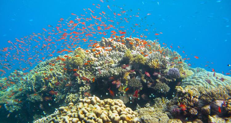 tau-rescue-korallen-titel