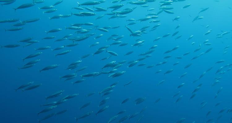 tau-rescue-unterwasser-titel