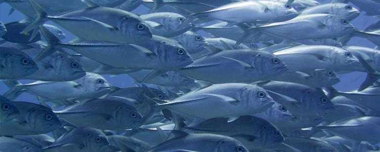 gespannt auf die Unterwasserwelt