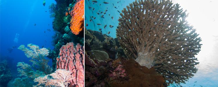 bei dieser Unterwasserwelt wurden Andreas Erwartungen bei Weitem übertroffen!
