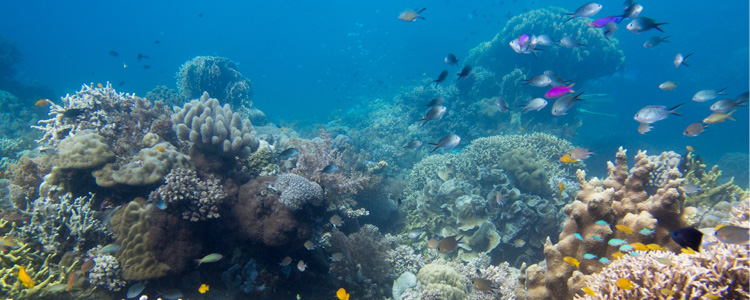 dankbar & happy, das Tubbataha-Riff betaucht haben zu dürfen