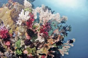 tau-komodo-korallen