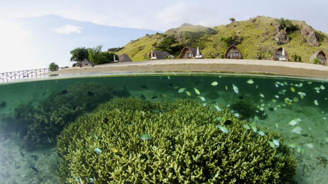tau-komodo-unterwasser