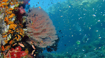 Tauchferien Indonesien Manta Reisen