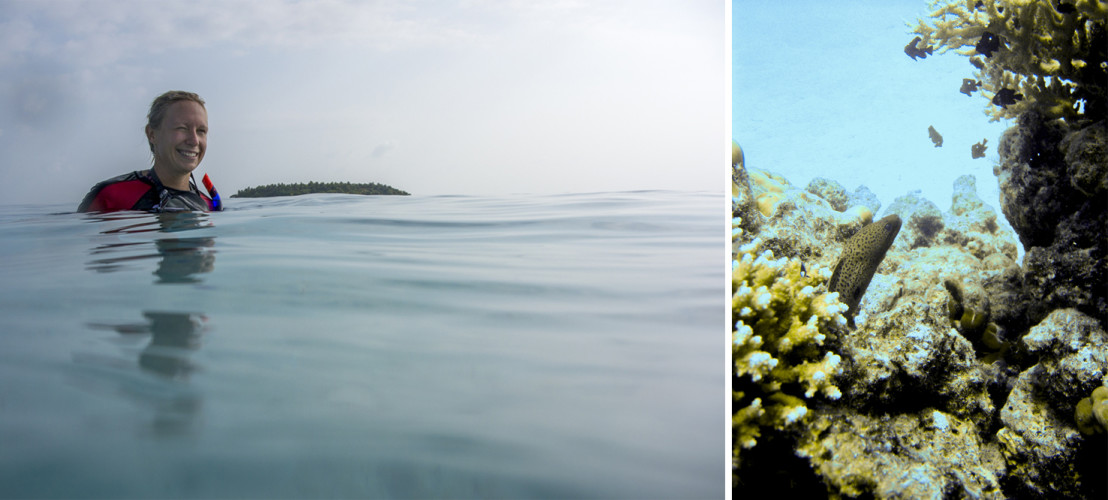 Korallen in allen Farben: Daran ist das Tauchteam von Reethi Beach ((LINK https://www.facebook.com/SeaExplorer/?fref=ts )) nicht ganz unschuldig. In stundenlanger Handarbeit haben sie gemeinsam einen neuen Korallengarten am Hausriff angelegt. Freut die Fische und die Gäste.