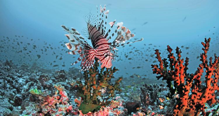 Rasdu-atoll