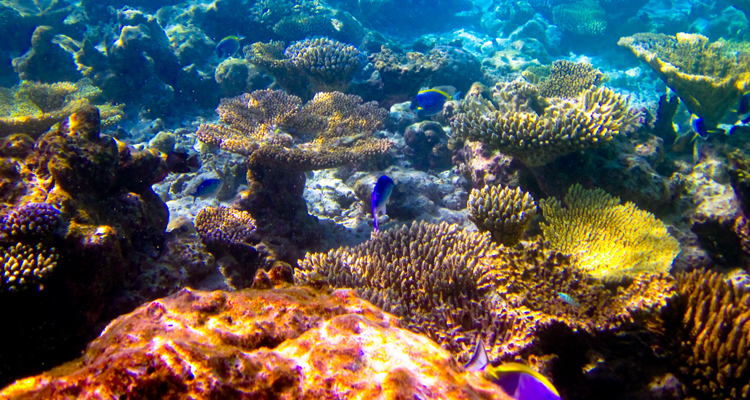 süd-nilandhe-atoll