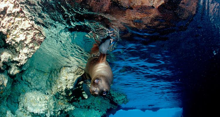 Galapagos Bilder: Galextour